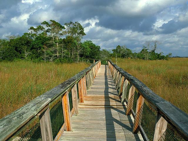 Mahogany Hammock Trail Boardwalk, Everglades National Park, Florida