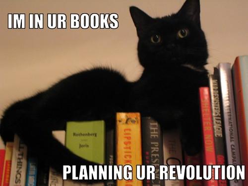 Ollie LOLcat