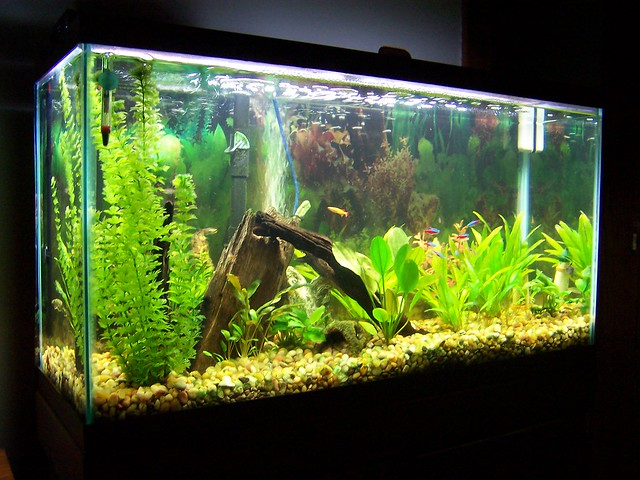 38 gallon freshwater aquarium flickr photo sharing for 38 gallon fish tank