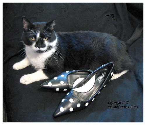 I Don't Care if You Fill Those Silly Shoes with Tuna Fish ... I Will NOT Wear Them!