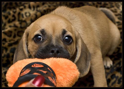 Bailey-Pugle  8 wks.