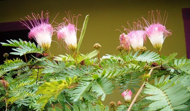 plantas jardim litoral:FLORES EXÓTICAS