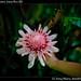Robert's garden, Costa Rica (8)