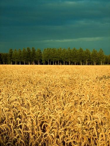 http://farm2.staticflickr.com/1020/754700200_fc6a5bde2d.jpg
