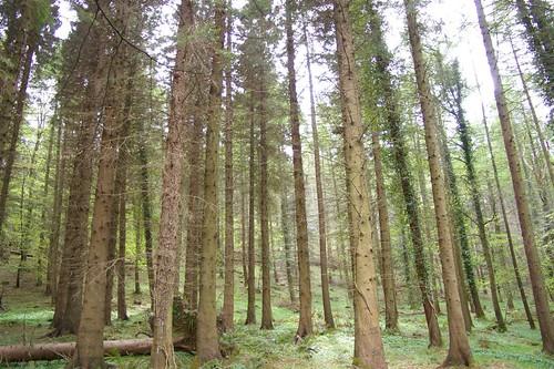 La foresta di Tollymore