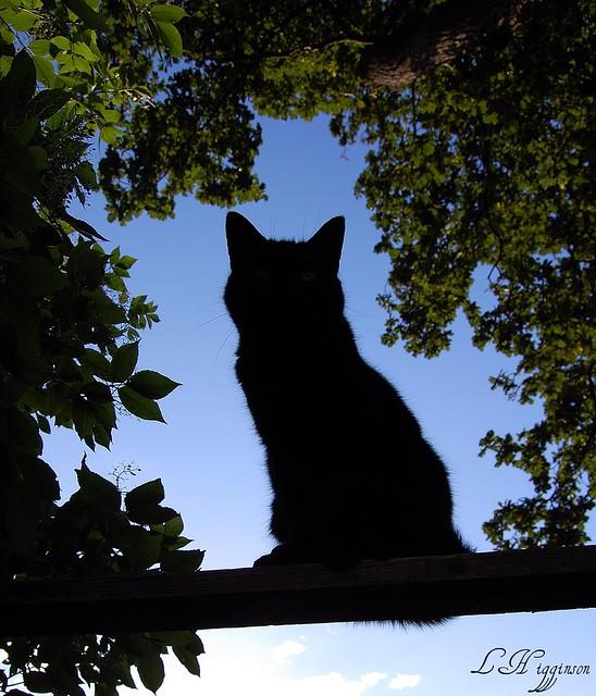 Cat facebook silhouette.