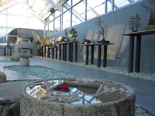 CV Starr Bonsai Museum