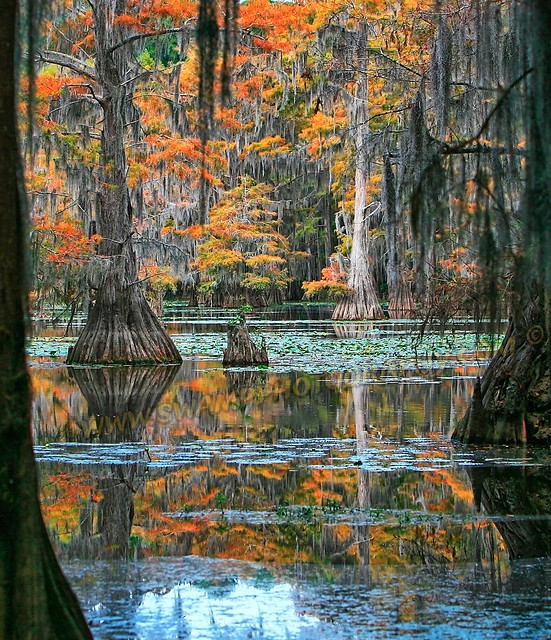 Caddo Lake Fall Colors