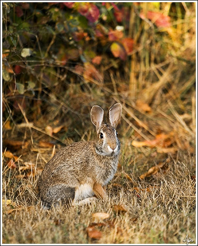 Shooting Rabbits In Colorado: Wild Rabbit At The Finley National Wildlife