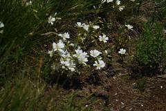 Wild flowers on the Planeze