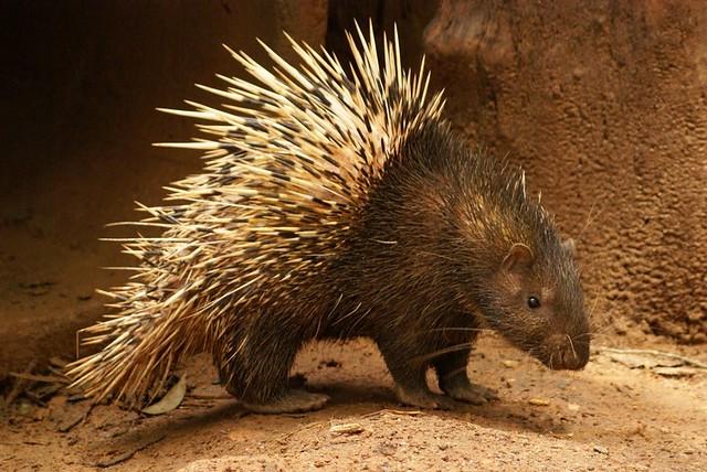 10 Spesies Hewan Yang Paling Sulit Ditemukan Di Bumi