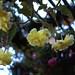 Yellow flowers in hanging garden by MathTeacherGuy