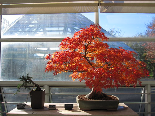 Fall Foligae in the Bonsai Museum