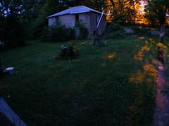 Fireflies 11