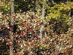 Autumn Colors Lake Crabtree NC 0447