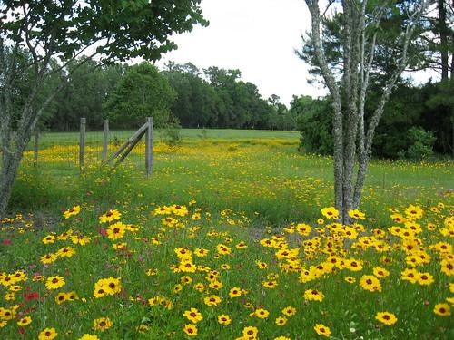 floridawildflower