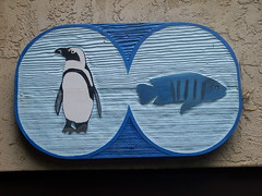 Penguins & Fish