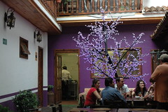 Violet Bar
