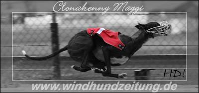 Greyhound Clonakenny Maggi