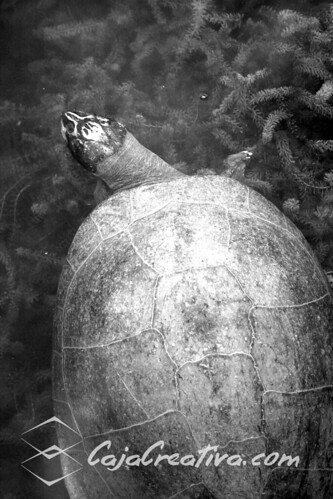 "Tortuga, venezuela from the book ""Le isole lontane"" by Sergio Albeggiani"