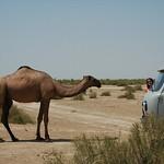 Talking to a Camel - Gonur Depe, Turkmenistan