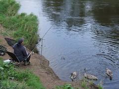 fishing, water, fish pond, recreational fishing, angling, pond, waterway,