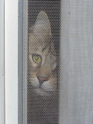 Can I come out?
