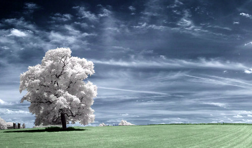 blue wallpaper usa tree grass clouds landscape ir arbol træ maryland bluesky boom árbol infrared 木 albero tre puu arbre árvore strom baum träd 树 r72 copac infrarot 红外 mytree дерево naturesfinest drzewo 나무 شجرة stablo infrarrojos 赤外線 红外线 infrapuna infrarood infrarouge дърво flickrsbest infrarossi herworld δέντρο 紅外線 f717ir treesubject инфракрасный ysplix inframerah אינפראאדום 紅外 पेड़ पेड infravörös infračervené 적외선 υπερύθρων अवरक्त 적외선의