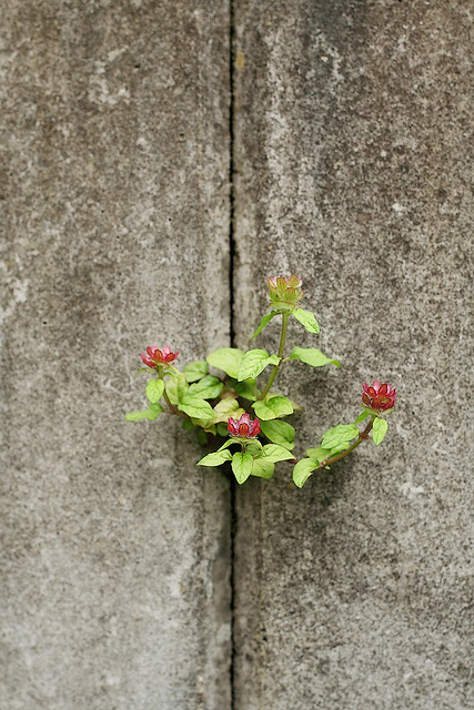 concrete flower