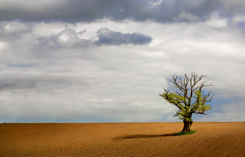 uk sky sun tree field wales canon landscape eos interestingness gallery britain cymru cardiff explore caerdydd lone 5d lonely agriculture plough wfc ploughed druidstone canoneos5d explored wentloog welshflickrcymru stevegarrington
