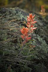 Spring Growth - Scholz Lake, Flagstaff, Arizona