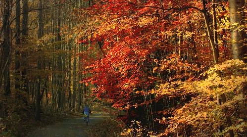 Autumn Bike Ride  [Explored]