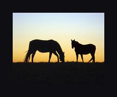 equine sunset  iii