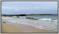 Tonn Fiáin  ~~  Wild Wave