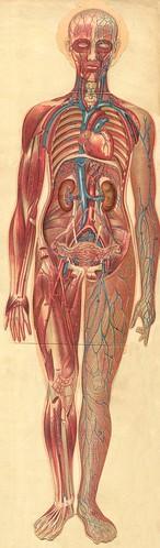 anatomie gmfemm3