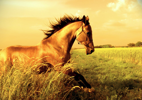 A horse frolics in golden light through the undergrowth