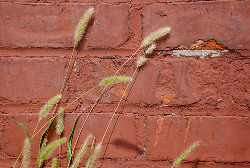 Grass Seeds, Brick Wall