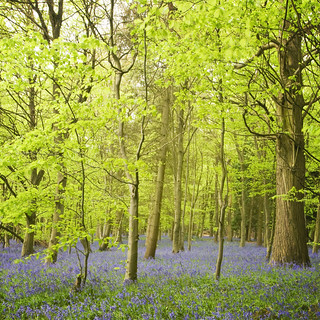 Trees floating in a sea of blue.....