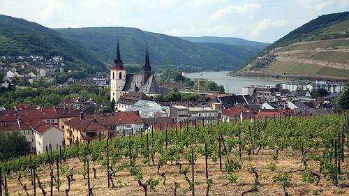Rhine view