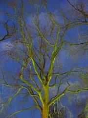 light my tree 2