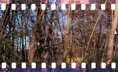 fall newjersey kodachrome kodachrome64 sprockets expiredfilm sprockethole kodakexpiredfilm fall2010 seagull2031haiou
