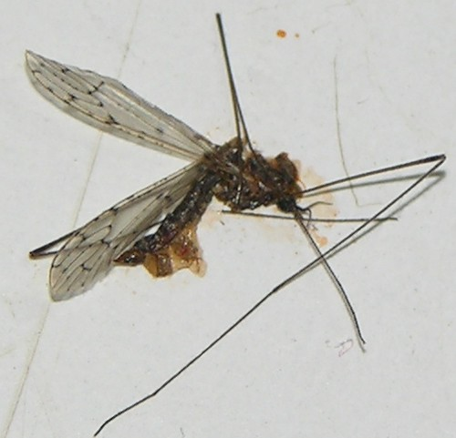 Kill Mosquitoes In Water Naturally