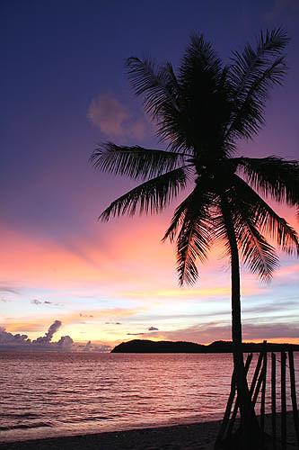palm trees tumblr vertical. Flickriver: Sanmang610\u0027s Photos Tagged With Vertical Palm Trees Tumblr