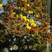Coffs Harbour Botanic Gardens - Non Rainforest Species