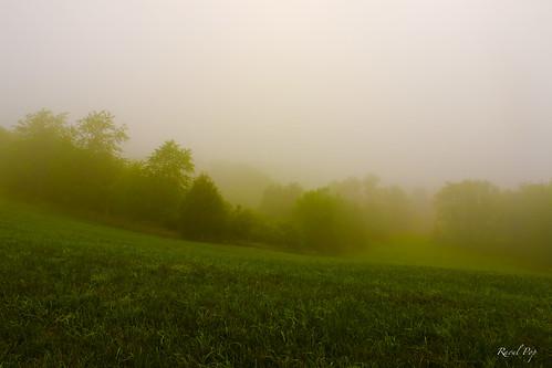 trees summer weather fog canon virginia flickr seasons unitedstates naturalbridge smugmug canoneos5d googlephotos pubrp