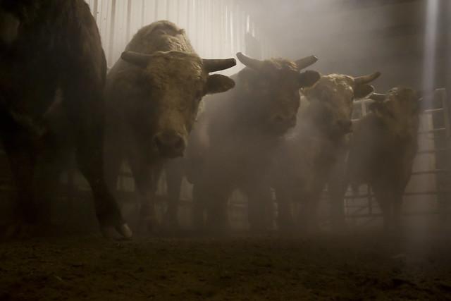 Da Bulls