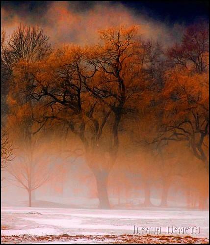 winter mist snow tree nature fog mystery landscape explore hdr arianwen mywinners flickrdiamond explore2010 bestcapturesaoi mygearandmepremium