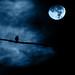 Noche de luna llena - Full moon night by Luz Adriana Villa A.