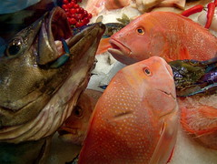 animal, fish, fish, seafood, marine biology, red snapper, food,