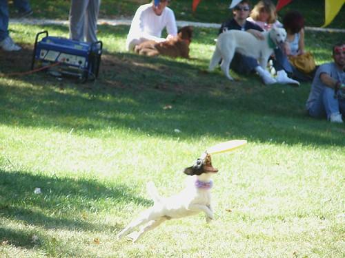 Sky Dogz Frisbee Dog Team